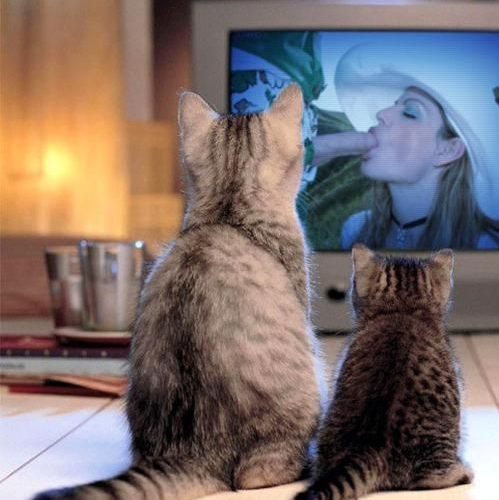 Funny Porn Pic – Kitty Porn!