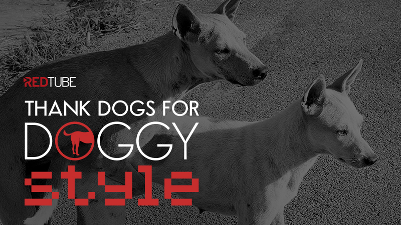 Help RedTube Save Homeless Dogs!